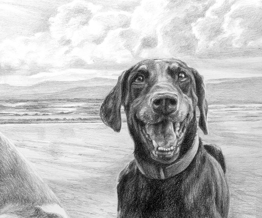 doberman dog portrait drawing detail