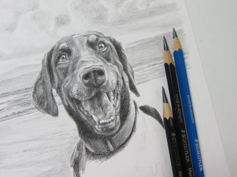 doberman sketch with pencils