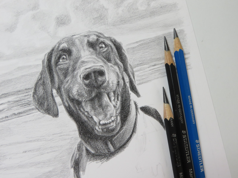 doberman sketch with pencils