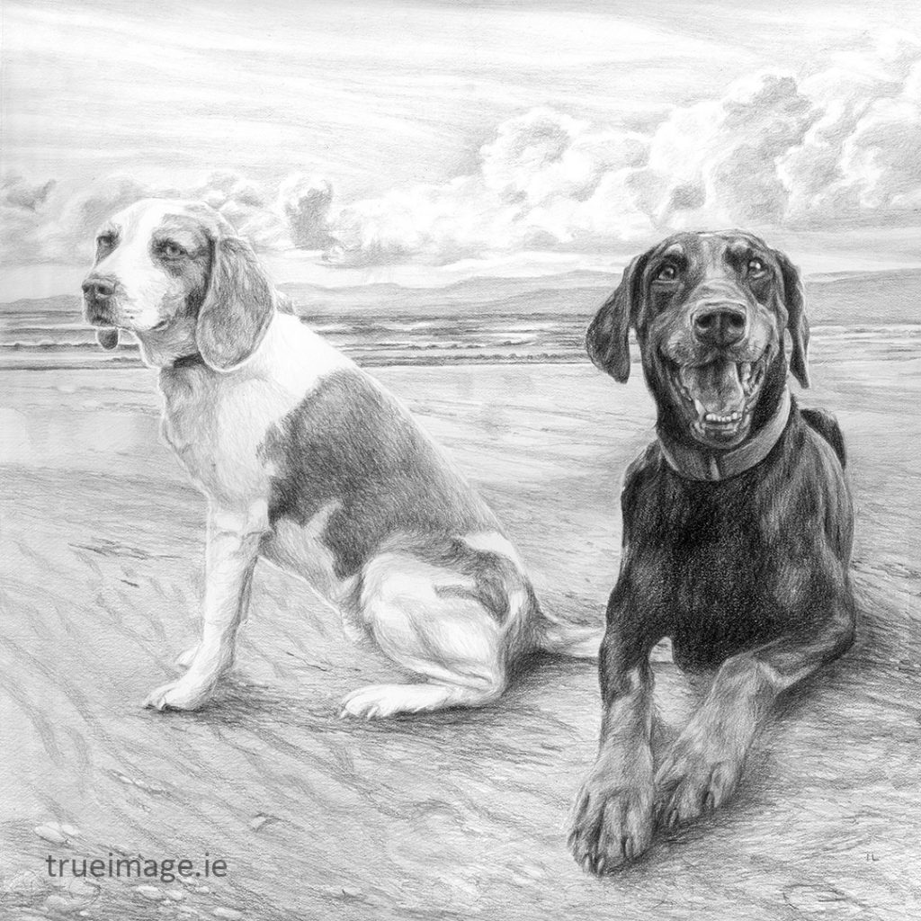 beagle and doberman dog sketch