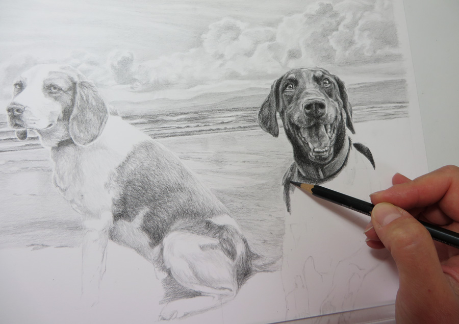 dog sketch in progress