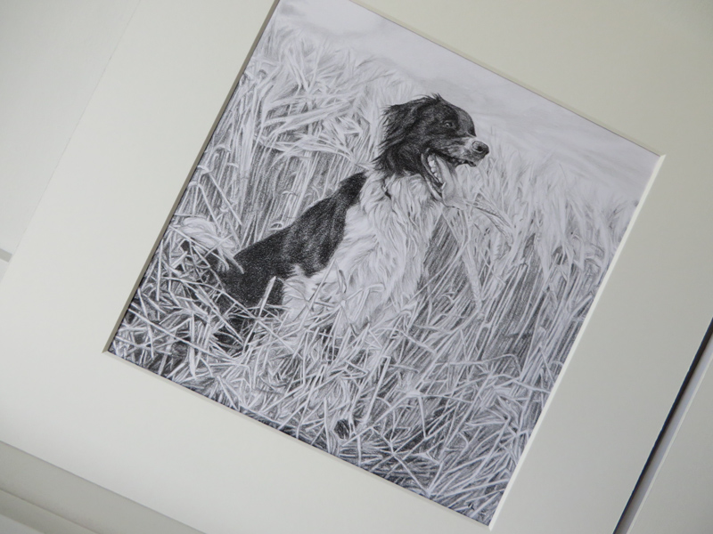 mounted pet portrait of a collie dog