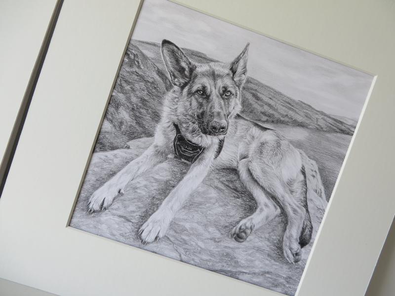 mounted pet portrait of a german shepherd