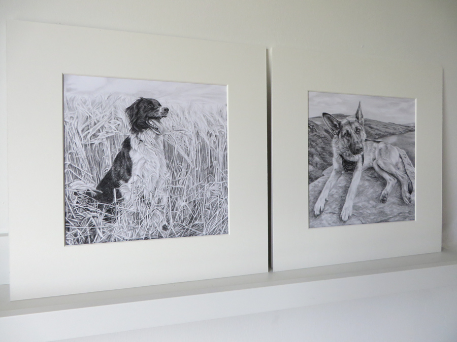 two mounted dog portrait drawings on paper